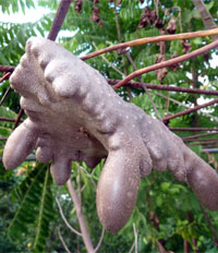 plante anti fourmis naturel